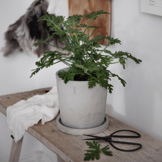 Betong potte Ernst lys grå