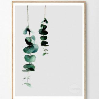 Eucalyptus poster Linn Wold