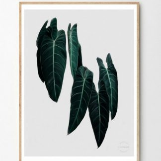 Philodendron poster Linn Wold