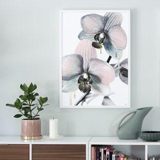 Poster Orchid orkide Design Lina Johansson