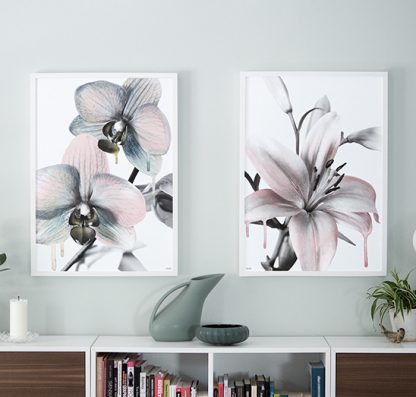 Poster Orchid orkide lily Design Lina Johansson