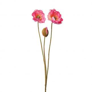 Valmue rosa 75 cm Mr Plant