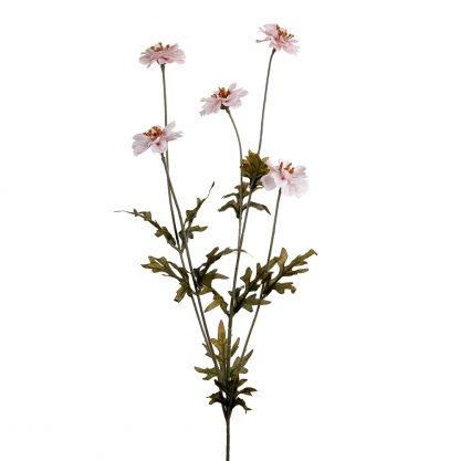 Coreopsis rosa Mr Plant