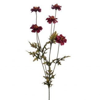 Coreopsis lilla Mr Plant