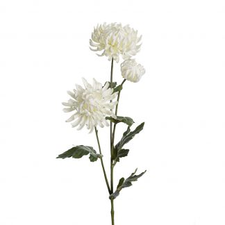Hvit krysantemum 60 cm Mr Plant
