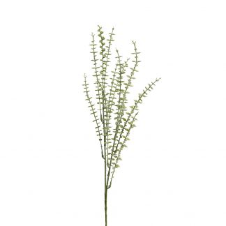 Eucalyptus 80 cm Mr Plant
