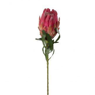 Protea rosa 60 cm Mr Plant