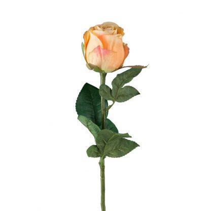 Oransje rose Mr Plant