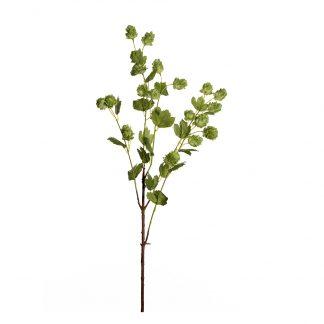 Humle gren 90 cm Mr Plant