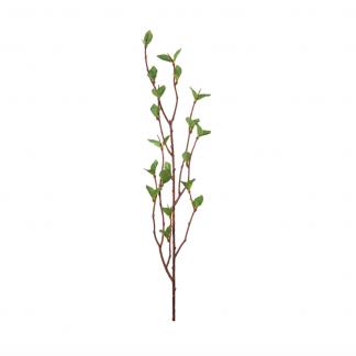 Bjørkekvist 50 cm Mr Plant