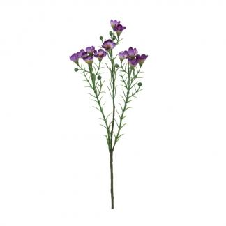 voksblomst lilla Mr Plant