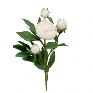 Peon hvit 65 cm Mr Plant