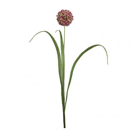 Allium Prydløk lilla 40 cm Mr Plant