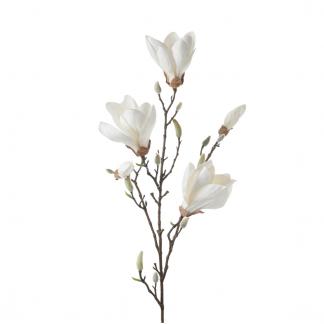 Magnolia gren hvit 95 cm Mr Plant