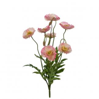 Rosa valmue 35 cm Mr Plant