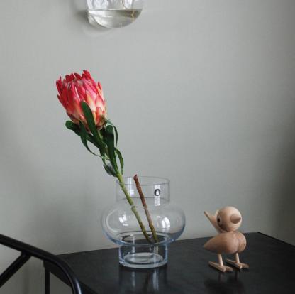 Mr plant protea rosa Lucie Kaas fugl House Doctor