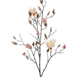 Magnolia gren rosa 110 cm Mr Plant