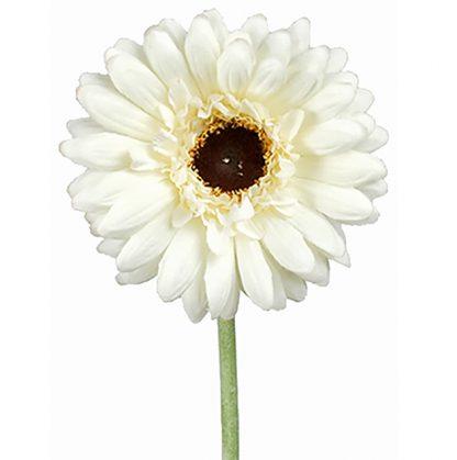 Gerbera hvit 55 cm Mr Plant