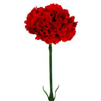 Nellik rød, 55 cm Mr Plant