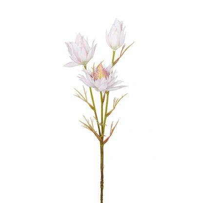 Blushing bride lys rosa Mr Plant