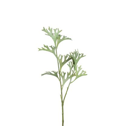 hjortehornbregne 50 cm Mr Plant