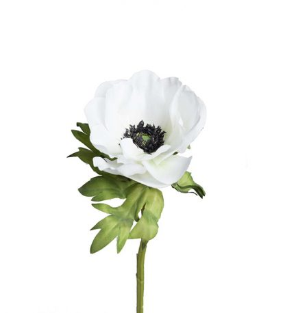 Anemone hvit Mr Plant