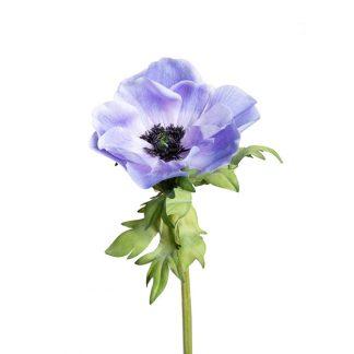 Anemone blå Mr Plant