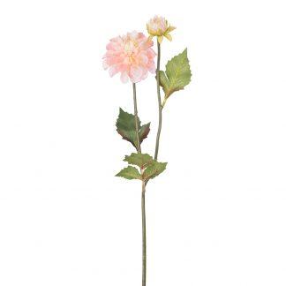 Dahlia oransje Mr Plant 50 cm