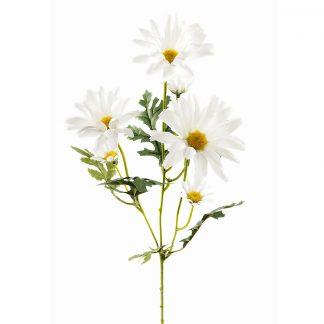 Prestekrage hvit 50 cm Mr Plant