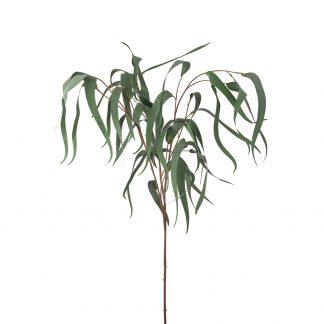 Eucalyptus 110 cm Mr Plant
