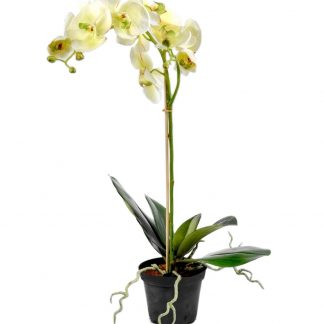 Orkide hvit 60 cm Mr Plant