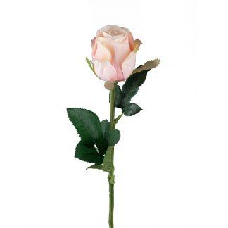 Rosa rose Mr plant 50 cm