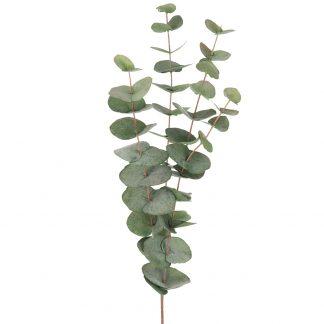 Eucalyptus 60 cm Mr Plant