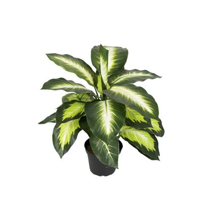 Prikkblad 48 cm Mr Plant
