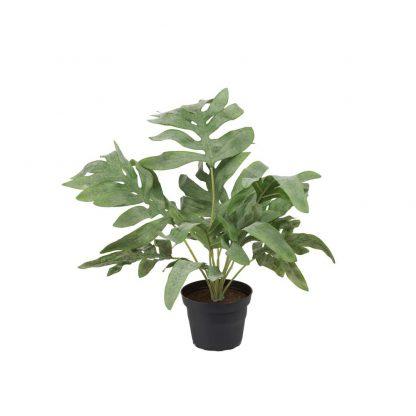Ormbunke 30 cm Mr Plant