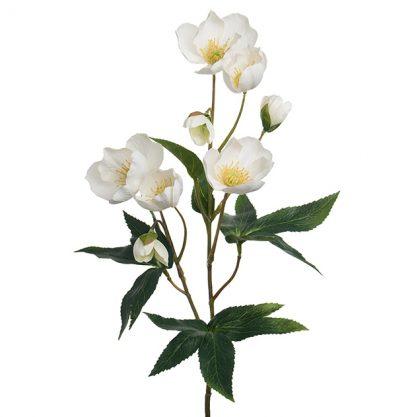 Mr plant Julerose hvit